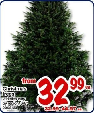 Real Canadian Superstore Christmas Trees - From $32.99 Christmas Trees - Real Canadian Superstore: Christmas Trees - RedFlagDeals.com